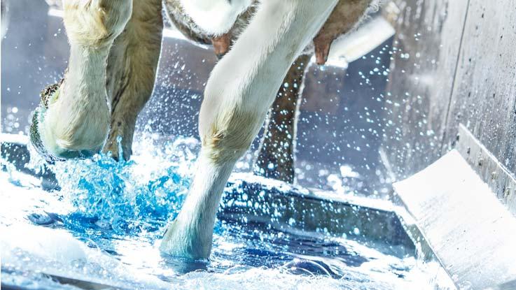 EasyStride hoof bath