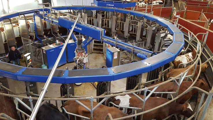 rotary milking solutions